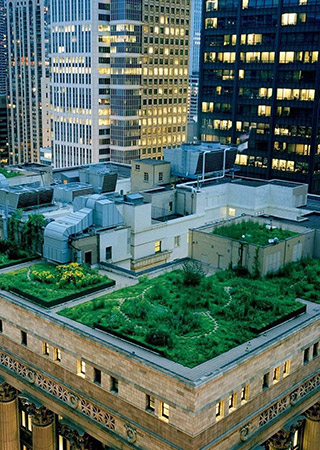Chicago City Hall: 20,000 plants and 90 kg of honey a year
