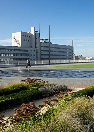 Rotterdam: clima mediterrâneo no cultivo no telhado