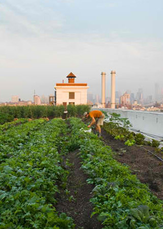 New York City: This 4,000 m2  farm has a weekly market
