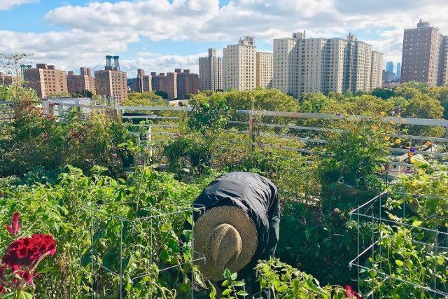 New York: cette ferme de 4000m² a un marché hebdomadaire